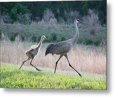 Trying To Keep Up Metal Print by Carol Groenen