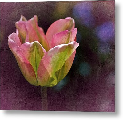 Tulipicity Metal Print by Richard Cummings