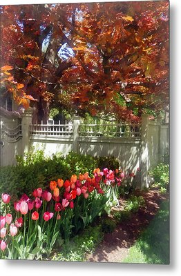 Tulips By Dappled Fence Metal Print by Susan Savad