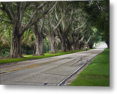 Tunnel Of Trees Metal Print by Robert Smith