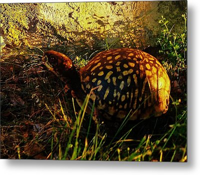 Turtle  Metal Print by Maria Blumberg