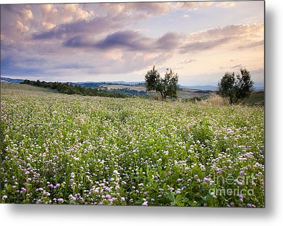 Tuscany Flowers Metal Print by Brian Jannsen