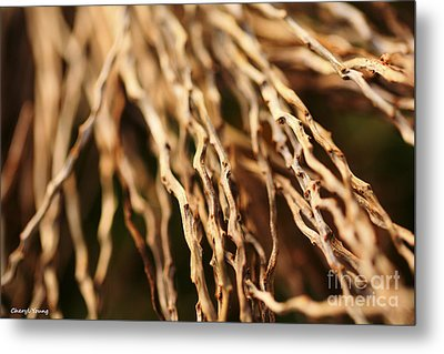 Twigs Metal Print by Cheryl Young