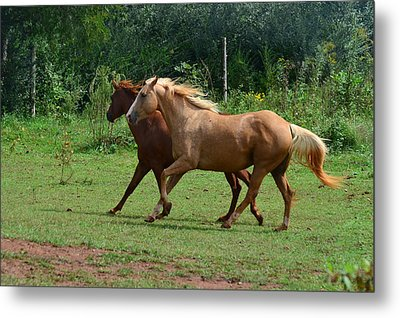 Two Horses In Unison  - 7221d Metal Print by Paul Lyndon Phillips