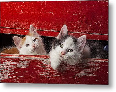 Two Kittens In Red Drawer Metal Print by Garry Gay