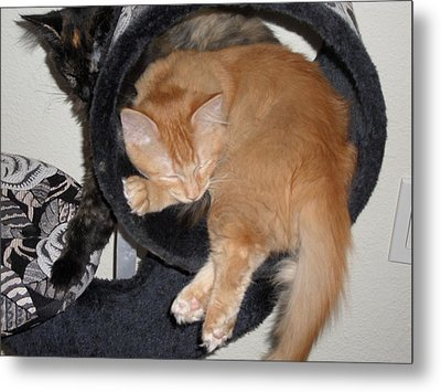 Two Kittens Metal Print by Val Oconnor