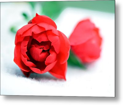 Two Rose Buds Metal Print by Susan Leggett