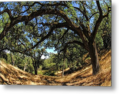 Under The Oak Canopy Metal Print by Donna Blackhall