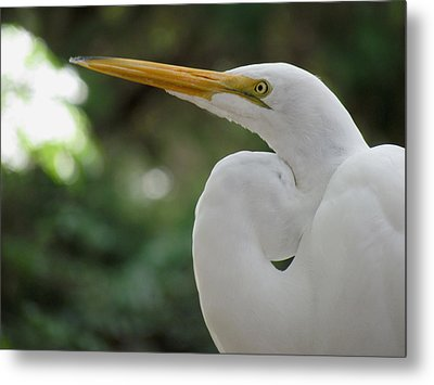 Up Close And Personal Metal Print by Judy Wanamaker