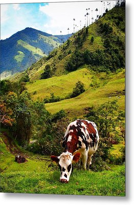 Vaca Metal Print by Skip Hunt