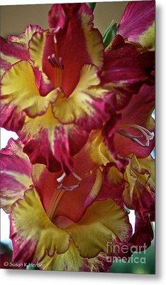 Vibrant Gladiolus Metal Print by Susan Herber