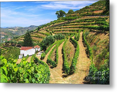 Vineyard Landscape Metal Print by Carlos Caetano