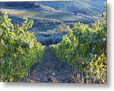 Vineyards Metal Print by Jeremy Woodhouse