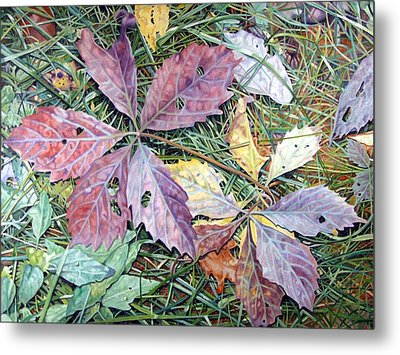 Virginia Creeper Metal Print by - Harlan