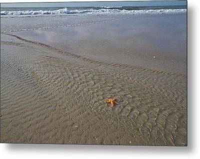 Waiting To Be Discovered Metal Print by Betsy C Knapp