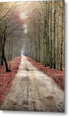 Walk Through Woods Metal Print by JimPix