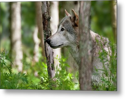 Watcher In The Woods Metal Print by Michael Cummings