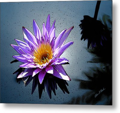 Water Lily Dream At Fairchild 2 Metal Print by Olivia Novak
