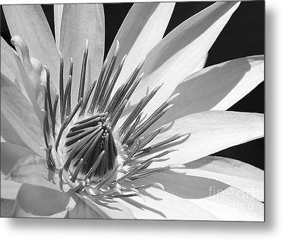 Water Lily Macro In Black And White Metal Print by Sabrina L Ryan