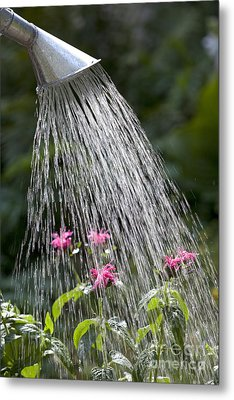 Watering Can Metal Print by Picture Partners and Photo Researchers