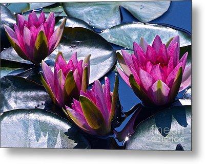 Waterlilies In Bright Sunlight Metal Print by Byron Varvarigos