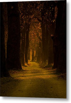 Way In The Forest Metal Print by Zafer GUDER