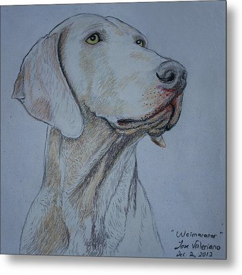 Weimaraner Dog Metal Print by Jose Valeriano