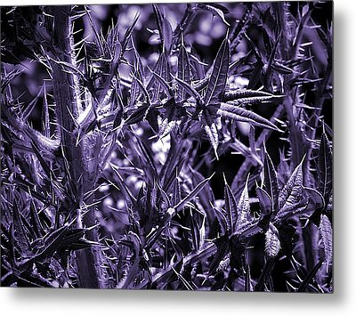 Welcome To The Purple Jungle Metal Print by Beth Akerman