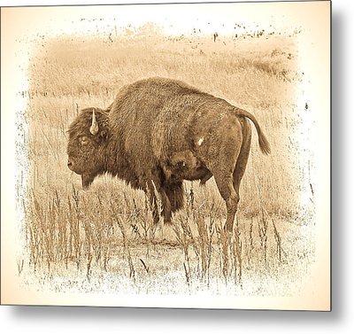 Western Buffalo Metal Print by Steve McKinzie