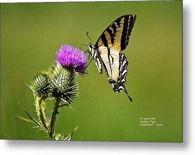 Western Tiger Swallowtail - Milkweed Thistle 2564 Metal Print by James Ahn