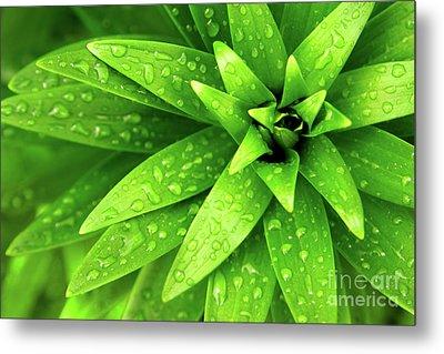 Wet Foliage Metal Print by Carlos Caetano