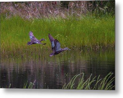 Wetland Wonders Iv Metal Print by Dave Kelly