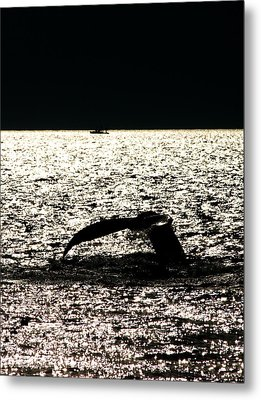 Whale In Sunset Metal Print by Paul Ge