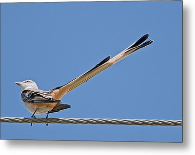 What A Long Tail You Have Metal Print by Bonnie Barry