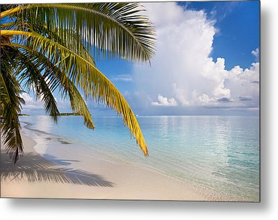 Whispering Palm On The Tropical Beach Metal Print by Jenny Rainbow