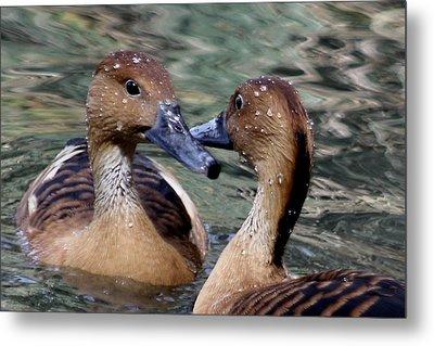 Whistling Ducks Metal Print by Paulette Thomas