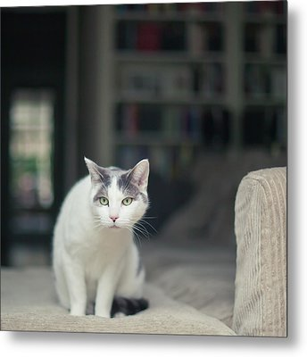 White And Grey Cat On Couch Looking At Birds Metal Print by Cindy Prins