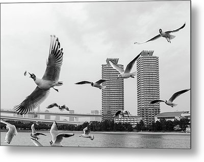 White Birds In Flight Metal Print by BZause a picture is worth a thousand words.