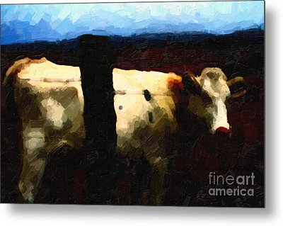 White Cow Behind Fence At Night Metal Print by Wingsdomain Art and Photography
