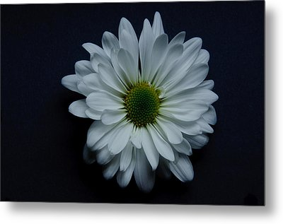 White Flower 1 Metal Print by Ron Smith