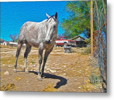 White Horse Metal Print by Gregory Dyer