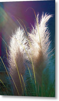 White Pampas Grass Metal Print by Richard Marquardt