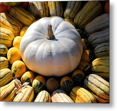 White Pumpkin Metal Print by Jai Johnson