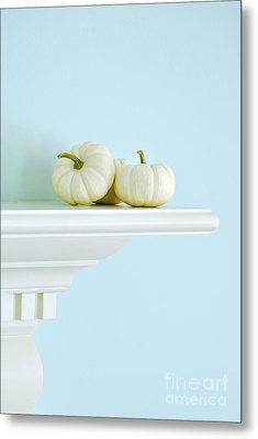 White Pumpkins Metal Print by HD Connelly