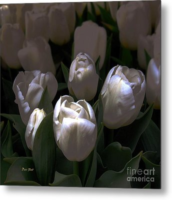 White Tulips Metal Print by Dale   Ford