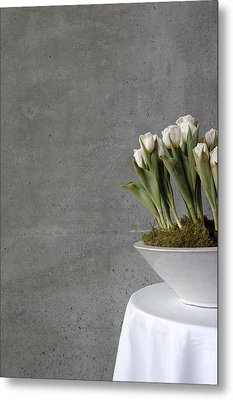 White Tulips In Bowl - Gray Concrete Wall Metal Print by Matthias Hauser