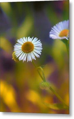 White Wildflower On Pastels Metal Print by Bill Tiepelman