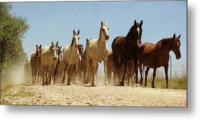Wild Horses Metal Print by Antonio Arcos Aka Fotonstudio Photography