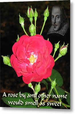 Wild Rose And The Bard Metal Print by Terry Lynch