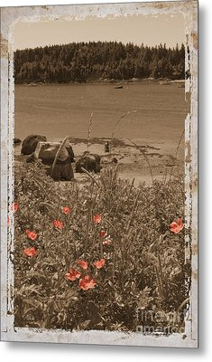 Wild Roses Metal Print by Jim Wright
